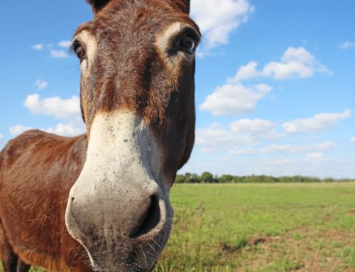 As a fundraiser, are you a donkey or a horse?